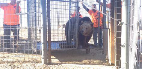 Peta Zoo Forest Park Black Bear Cubs