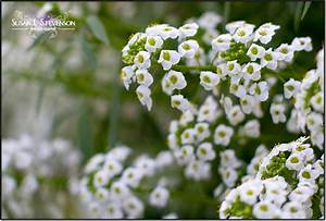 85+ Types Of White Flowers Names - White Flowers Are ...