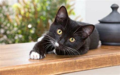 Kāpēc mājoklī noteikti jādzīvo kaķim? Atbilde tevi ...
