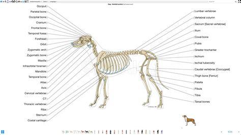 atlas anatomico legendado cao ilustrado
