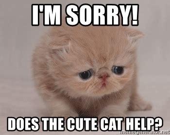 Cute Cat Meme Generator - i m sorry does the cute cat help super sad cat meme generator