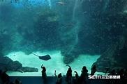 直擊/最美水族館Xpark 內部首曝光 5亮點一覽美景   生活   三立新聞網 SETN.COM