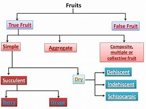 Examples Of False Fruits