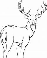 Elk Coloring Pages Getdrawings sketch template