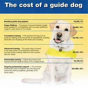 guide dogs hemingway run With dog training cost