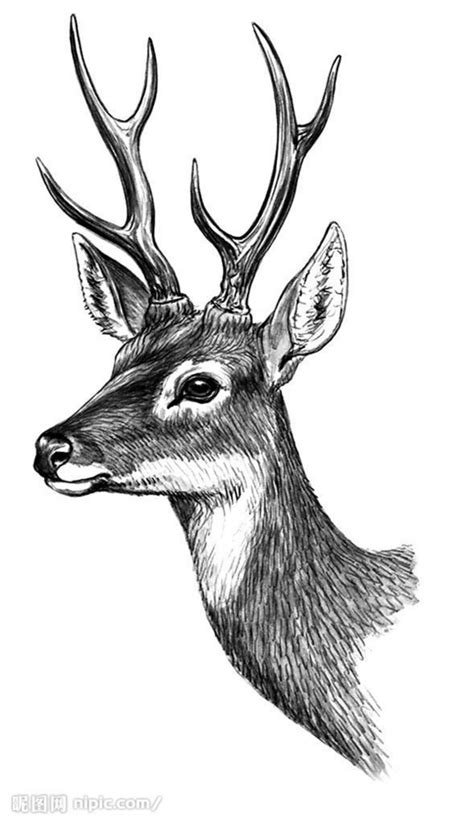 black and white 求一些超清精微素描图片 要超清的 最好是动物的 谢各位大神 百度知道