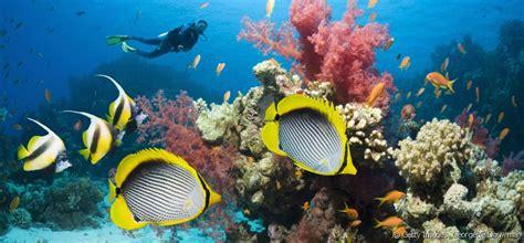 comment cuisiner celeri le de plongee sous marine 28 images plong 233 e sous