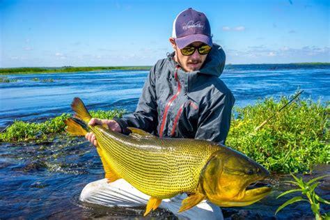 dorado golden fish argentina fly fishing freshwater duranglers pira lodge lodges