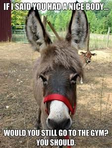 Bad Pickup Line Donkey memes   quickmeme