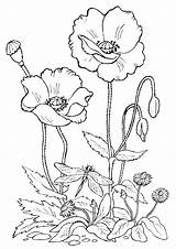 Bed Coloring Flower Pages Flowerbed sketch template
