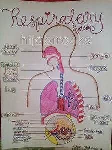 Respiratory System Drawing Label