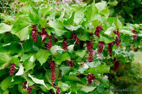 comment cuisiner le kale arbre aux faisans hortus focus i mag