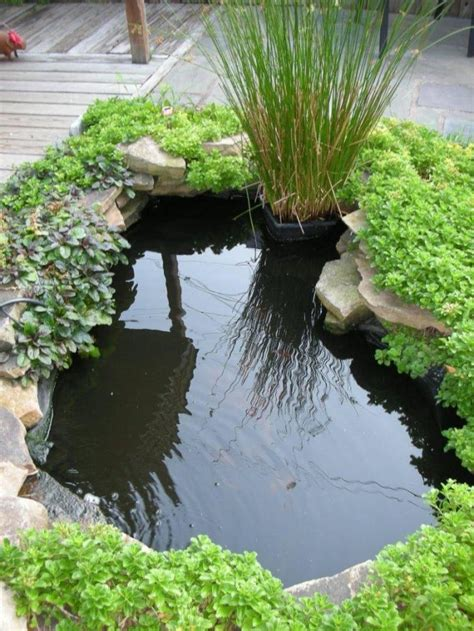 small fish pond  home garden