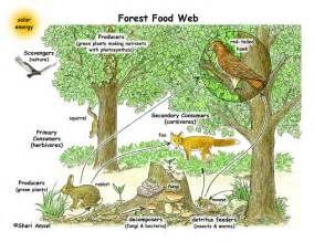 forest ecosystem food web to make black and white copies for your whole class see the copy