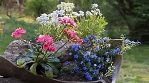 Blumen Für Steingarten : steingarten anlegen anleitung f r mini steingarten ~ Markanthonyermac.com Haus und Dekorationen
