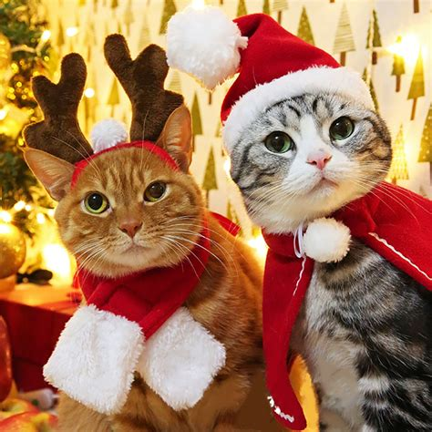 christmas cloak  cats red xmas suit  dogs cat