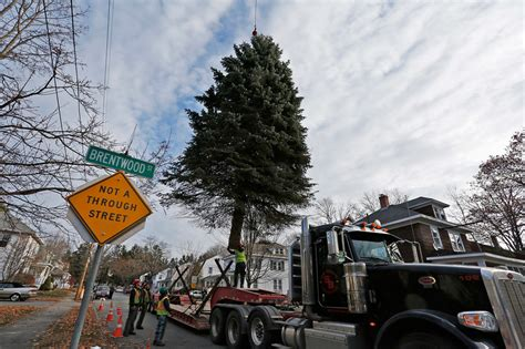 portland s christmas tree is delivered lit up the