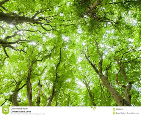 canap tress forrest canopy royalty free stock images image 34483589