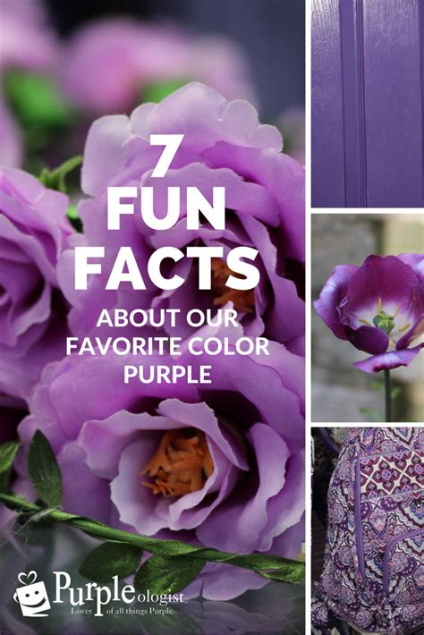 7 Fun Facts About Our Favorite Color Purple! Purpleologist