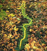 Andy Goldsworthy Leaves