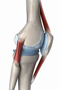 Knee Ligament Injuries  Tear  U0026 Sprained
