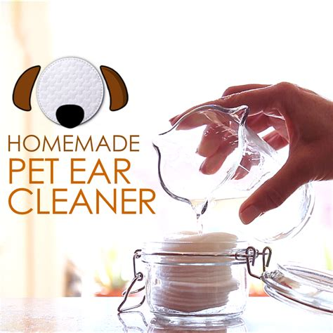 diy ear cleaner  pets planet paws