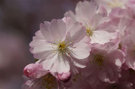 Free Images : branch flower petal bloom food spring
