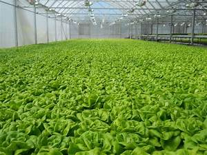 A Beginner Guide To Hydroponics