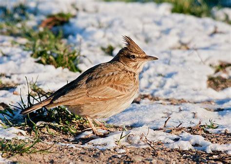 Latvijas Putni - Foto Kolekcija