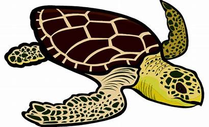 Turtle Sea Clipart Loggerhead Leatherback Turtles Gclipart