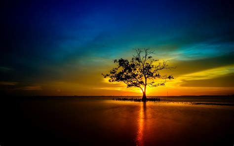 tree lonely sunset sunrise landscape nature sun
