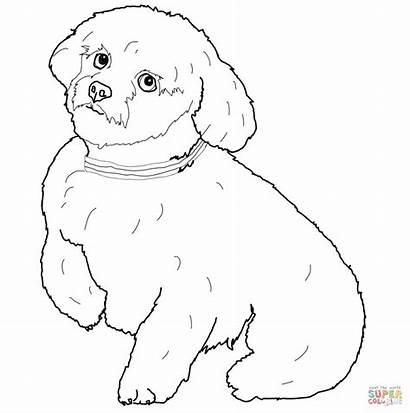 Kleurplaten Maltese Coloring Dog Short Maltezer