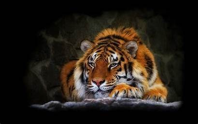 Tiger Cool Wallpapers 4k Desktop Wallpapertag Mobile