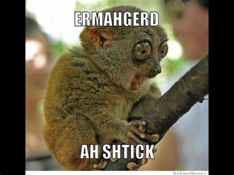 Ermahgerd Animal Memes - ermahgerd animals www imgkid com the image kid has it