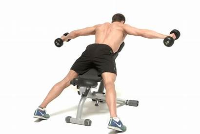 Bench Weight Reverse Fly Weights Benches Folding