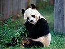 Panda Facts - Pakistan Affairs