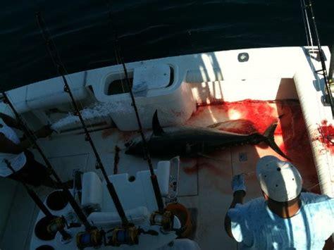 bloody decks vallarta vallarta fishing report yellowfin tuna epic