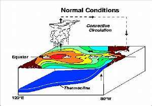 Normal Pacific Pattern  Equatorial Winds Gather Warm Water