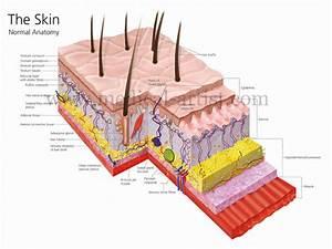 Digital Medical Illustrations
