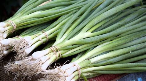 what is a scallion scallion vs green onion www pixshark com images galleries with a bite