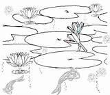 Pond Coloring Pages Habitat Printable Fish Drawing Clipart Duck Realistic Colouring Scene Ponds Sketch Habitats Plants Getdrawings Getcolorings Sketchite Lily sketch template