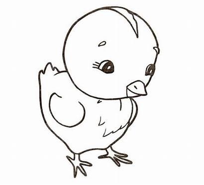 Chicken Coloring Pollito Colorear Colorare Dibujos Dibujo