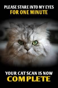 the cat s meow meow cats photo 25208615 fanpop