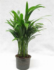 Buy, Top, 5, House, Plants, Pack, Online, At, Best, Prices, In, India