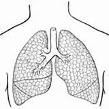 Coloring Human Organs Lungs Preschool Arm Kindergarten Finger Hand sketch template