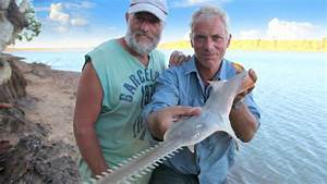 Accidentally Catching A Sawfish Pup - River Monsters - YouTube