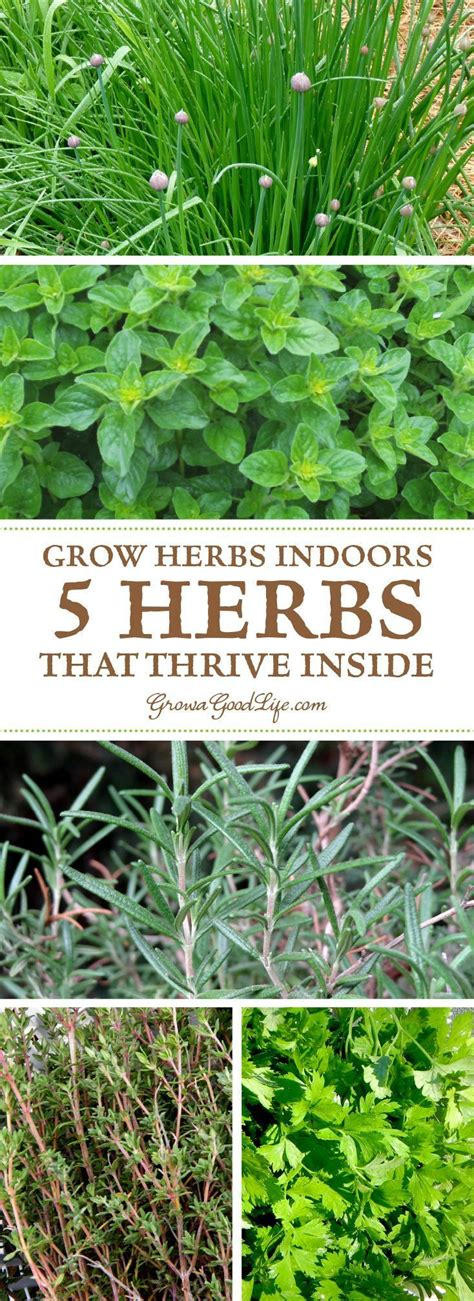 Herbs That Can Grow Inside by Grow Herbs Indoors 5 Herbs That Thrive Inside Herbs