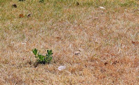 Wie Tief Wurzelt Rasen by Rasenpflege Im Herbst Die Besten Tipps Mein Sch 246 Ner Garten
