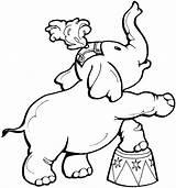 Elephant Coloring Circus Teaching Ball Through Standing Hard Animal sketch template