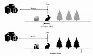 What Is Depth Of Field  Examples Of Shallow Vs Deep Depth